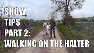SHOW TIPS PART 2 |  WALKING ON THE HALTER