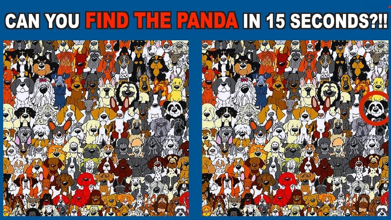 best of find the hidden panda puzzle game youtube
