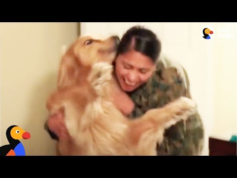 Dog Goes Crazy Every Time Marine Mom Comes Home - OSHIE | The Dodo