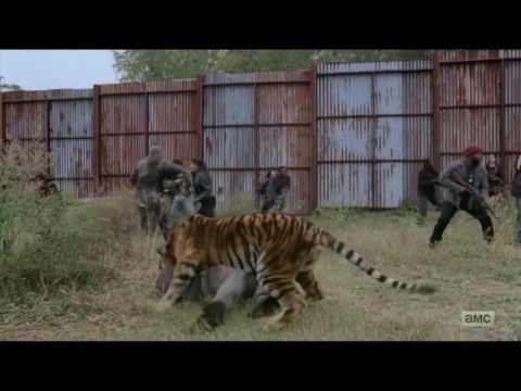 The Walking Dead 7x16 Shiva Saves Carl From Negan All Out War Begins