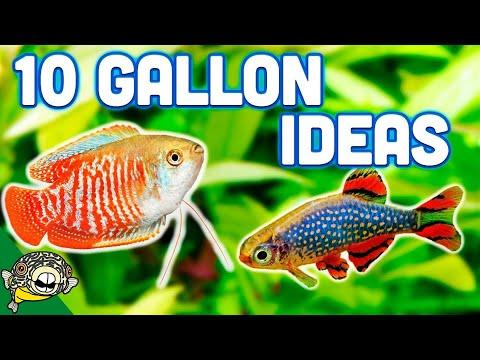 The BEST Ideas For Your 10 Gallon Aquarium