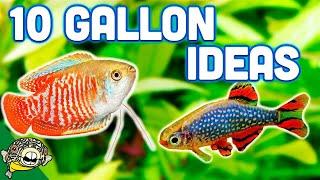 The Best Ideas For Your 10 Gallon Aquarium Youtube