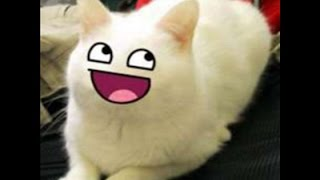 HI DOG! BUT IMA CAT XD// ROBLOX #6; RHS & Life In Paradise// Prem Plays