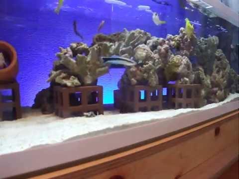 ????? 2 salt water fish tank   YouTube