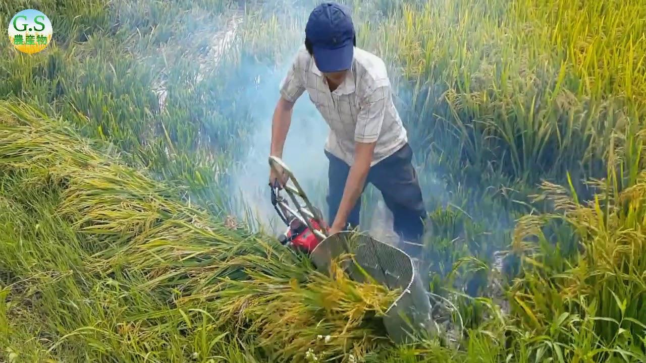 ハンドヘルド刈取機】この機械で手作りの米を収穫する必要はもう ...