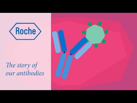 The story of our antibodies