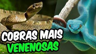 Top 10 Cobras Mais Venenosas Do Mundo