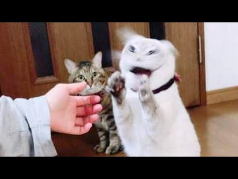 LAUGH ALL DAY! - Ultra FUNNY ANIMALS