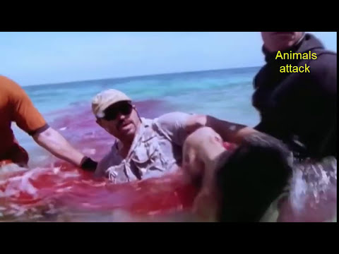 Teenage Girl Dies After Horrific Shark Attack - Shark Attack Footage Caught On Tape 2016 || (HD)