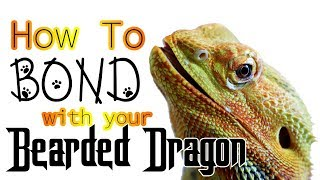 How To Bond With Your Bearded Dragon