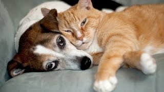 Do Cats Get Along With Other Pets? | Cat Care