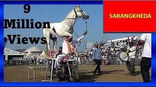 पहल बर घड़ क बलट डस नच India&#39s Got Talent Amazing Indian Marwari Horse Dance On Motorcycle