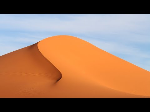 The Sahara desert   Ecosystems