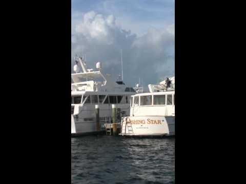 Peruvian dock, Pb, Fl Valentina Aved 12018384838