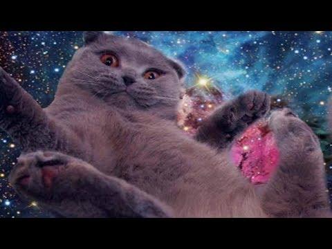 Dankest CAT Memes *THAT CURED MY DEPRESSION* (SE:1 EP:2)