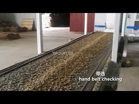 Ethiopia 5TPH Coffee Bean Cleaning Plant (selecting, Grading, Color Sorting ) ---Win Tone Machinery