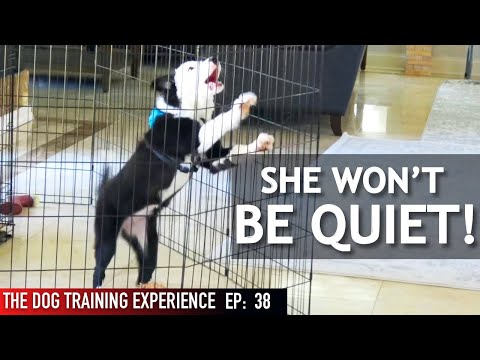 My Dog Barks When I Leave Her Alone! Watch Me Train Her To Stop!