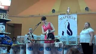 Монопородное шоу мейн-кунов (WCF, Смоленск, 13.07.2014)