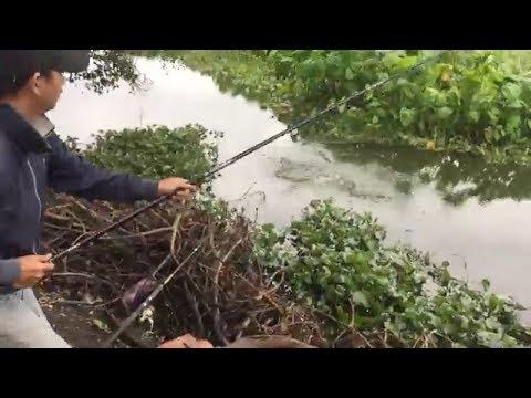 câu cá đầm lầy 20 năm,con cá nào lên cũng muốn gãy cần.