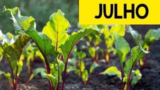 O Que Semear no Mês de Julho na Nossa Horta
