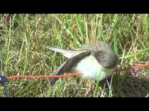 Dyr og fugler om våren og sommeren på Vestlandet.