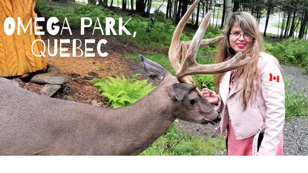 Download কানাডিয়ান পার্ক দেখতে যাচ্ছি | Traveling Omega Park, Qubec, Canada