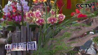 [中国新闻] 小年将至 年味渐浓 北京:2020年迎春年宵花开市   CCTV中文国际