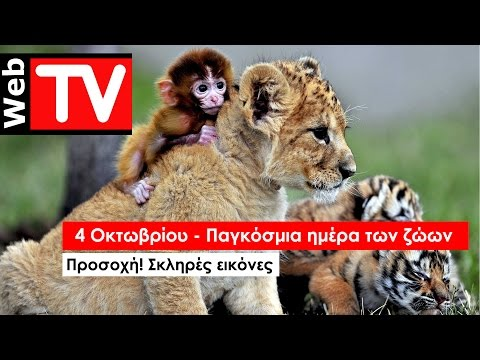4 Οκτωβρίου - Παγκόσμια Ημέρα των Ζώων. Πόσο περήφανοι είμαστε;