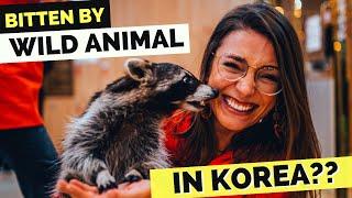 BITTEN by WILD ANIMAL in Seoul??