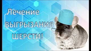 Лечение ВЫГРЫЗАНИЯ у ШИНШИЛЛ!