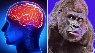 Intelligence In Human Vs Animals | Learn Interesting And Amazing Science Facts With HooplaKidz Lab
