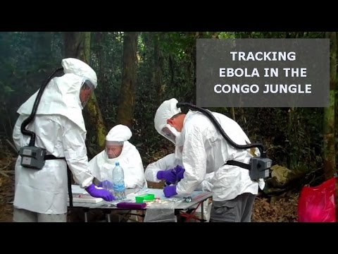 Tracking Ebola in the Congo Jungle