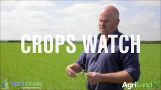 作物观察:在春大麦上建立良好的根系结构是关键。