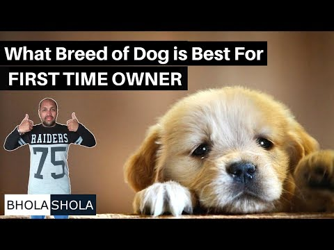 Pet Care - What Breed of Dog is Best For First Time Owners - Bhola Shola