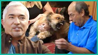 Dog Won't Stop Attacking Husband   Cesar 911
