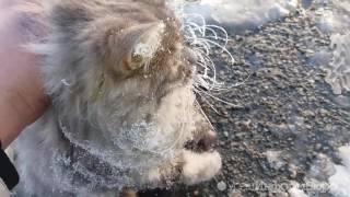 Спасение вмерзшей в лед кошки В Златоусте(, 2016-12-08T11:11:24.000Z)