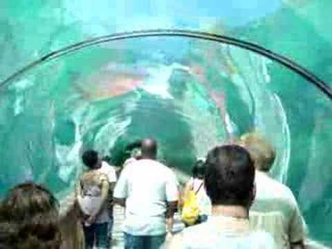 aquarium tunnel atlantis hotel bahamas youtube. Black Bedroom Furniture Sets. Home Design Ideas