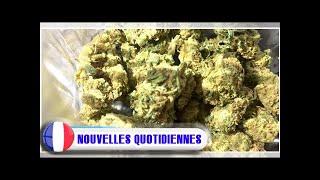 Le luxembourg va légaliser le cannabis à usage thérapeutique