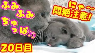 【悶絶注意!】おっぱいふみふみちゅぱちゅぱ可愛い子猫❤(^^♪Animation of my cute kittens.