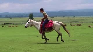 רכיבה על סוסים באתיופיה! (ולוג)