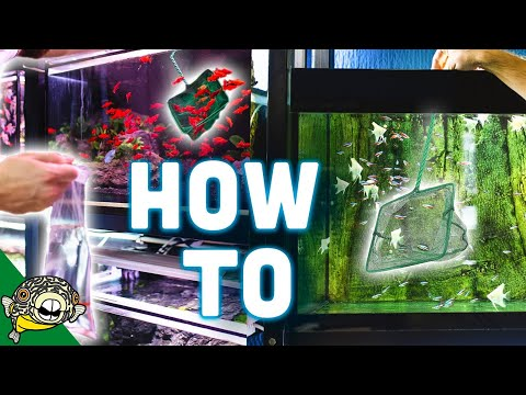 How to Catch Fish Tutorial. All my Tips, Tricks and Secrets.