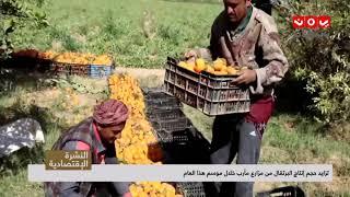 تزايد حجم إنتاج البرتقال من مزارع مأرب خلال موسم هذا العام