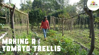How to make a trellis for Tomatoes (climbers)