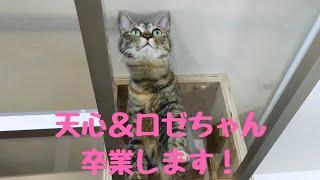 🖤天心&ロゼちゃんよりご報告🖤最後まで見てね!ライブ配信のお知らせも!