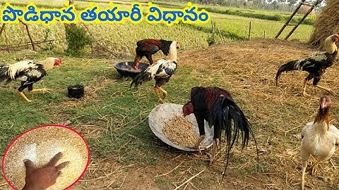 How to make dry feed for chicken birds | in telugu