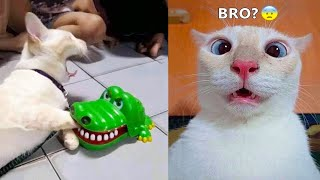 Funniest Animals  Best Of The 2021 Funny Animal Videos #55