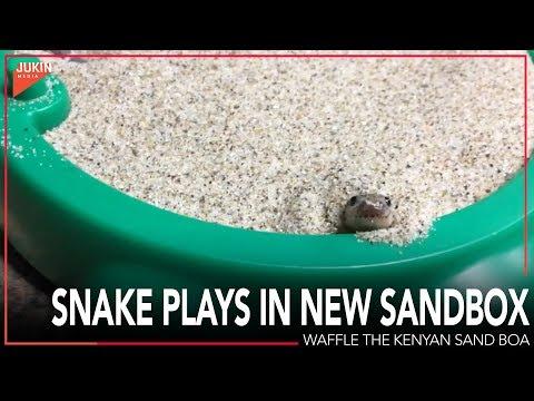 Snake Plays in New Sandbox