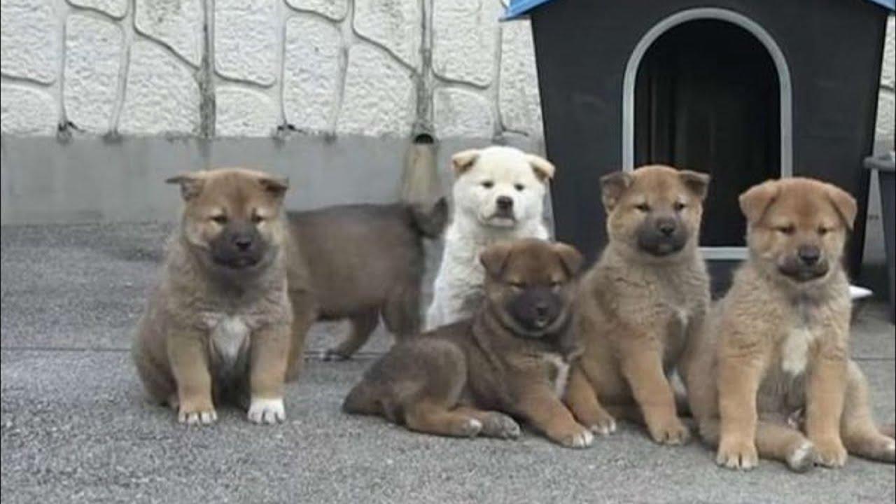 Собака со своими крохотными щенками пришла в дом к ...