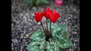 説明 1955年(昭和30年)、奈良光枝さんによる素敵な歌唱です。背景は...