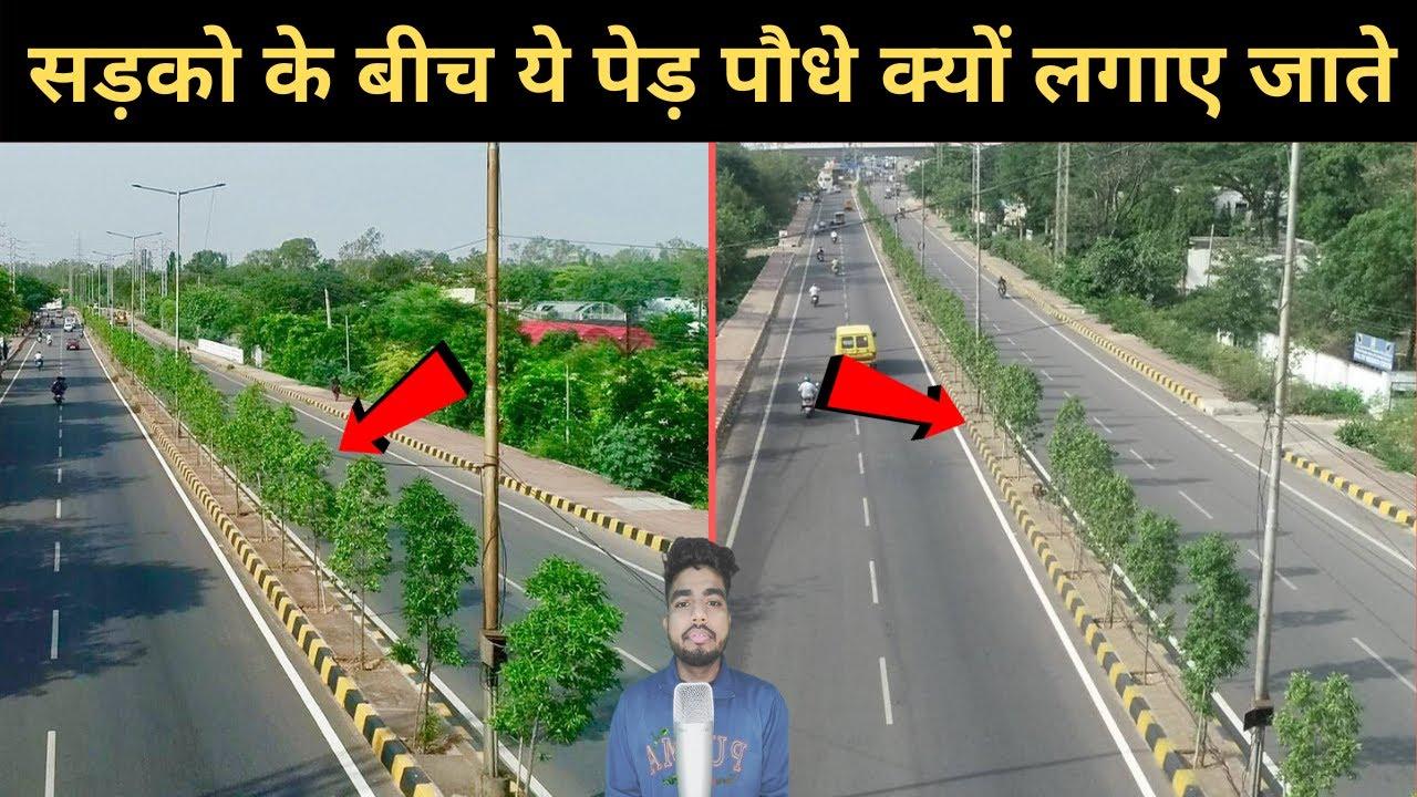 #shorts Why plants are planted in the middle of the roads क्यों सड़को के बीच ये पेड़ पौधे लगाए जाते है
